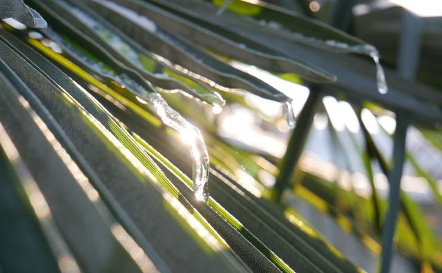 De doorgeefcamera: 'De smeltende ijspegels aan onze palmen zijn prachtig'
