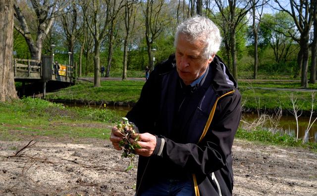 Een wolzwevertje en eetbaar koolzaad: dit bloeit en vliegt er rondom het Nicolaes Tulphuis