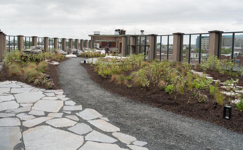 Planten en een slimme afvoer: dak Benno Premselahuis kleurt groen